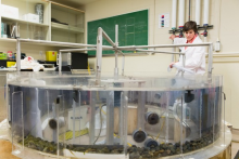 A researcher working with an aquaculture research tank