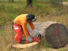 Person cuts a tree trunk with a chainsaw